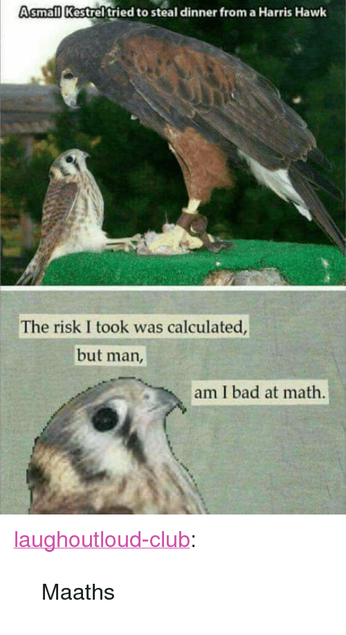 "Risk I Took Was Calculated But Man Am I Bad At Math: Asmall Kestrel tried to steal dinner from a Harris Hawk  The risk I took was calculated  but man  am I bad at math <p><a href=""http://laughoutloud-club.tumblr.com/post/169571257609/maaths"" class=""tumblr_blog"">laughoutloud-club</a>:</p>  <blockquote><p>Maaths</p></blockquote>"