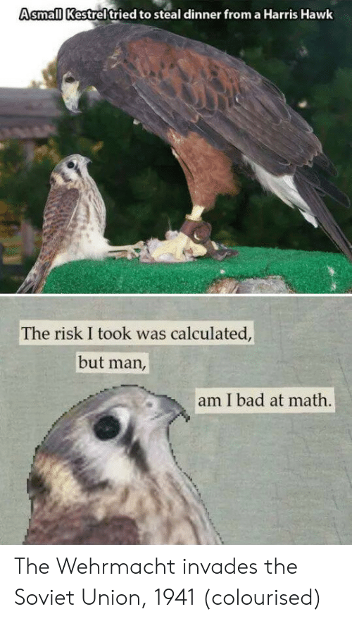 Risk I Took Was Calculated But Man Am I Bad At Math: Asmall Kestreltried to steal dinner from a Harris Hawk  The risk I took was calculated,  but man,  am I bad at math. The Wehrmacht invades the Soviet Union, 1941 (colourised)