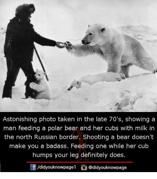 polarized: Astonishing photo taken in the late 70's, showing a  man feeding a polar bear and her cubs with milk in  the north Russian border. Shooting a bear doesn't  make you a badass. Feeding one while her cub  humps your leg definitely does.  /didyouknowpagel@didyouknowpage