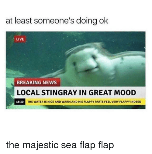 Mood, News, and Breaking News: at least someone's doing ok  LIVE  BREAKING NEWS  LOCAL STINGRAY IN GREAT MOOD  18:30  THE WATER IS NICE AND WARM AND HIS FLAPPY PARTS FEEL VERY FLAPPY INDEED the majestic sea flap flap