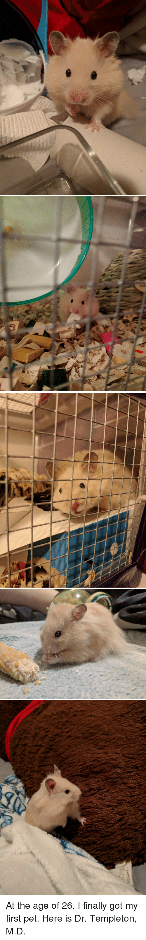 templeton: At the age of 26, I finally got my first pet. Here is Dr. Templeton, M.D.