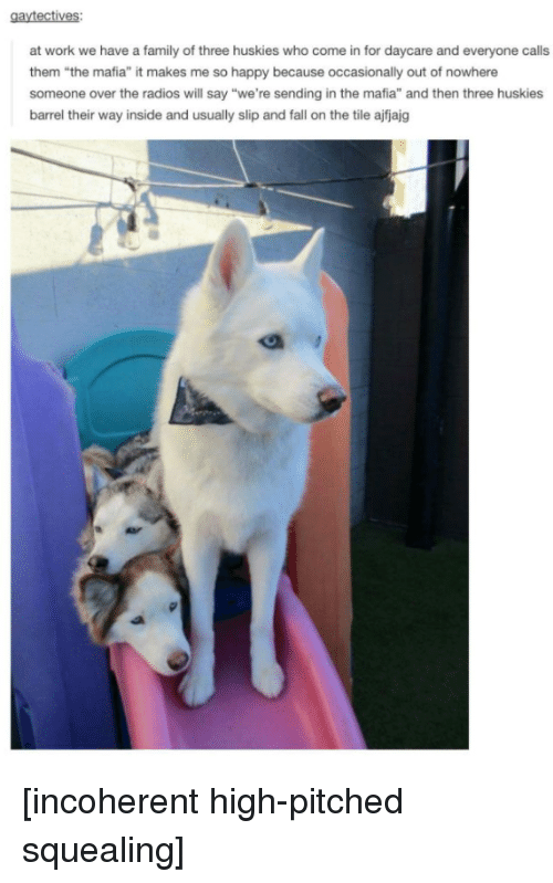 """incoherent: at work we have a family of three huskies who come in for daycare and everyone calls  them """"the mafia"""" it makes me so happy because occasionally out of nowhere  someone over the radios will say """"we're sending in the mafia"""" and then three huskies  barrel their way inside and usually slip and fall on the tile ajfjajg [incoherent high-pitched squealing]"""