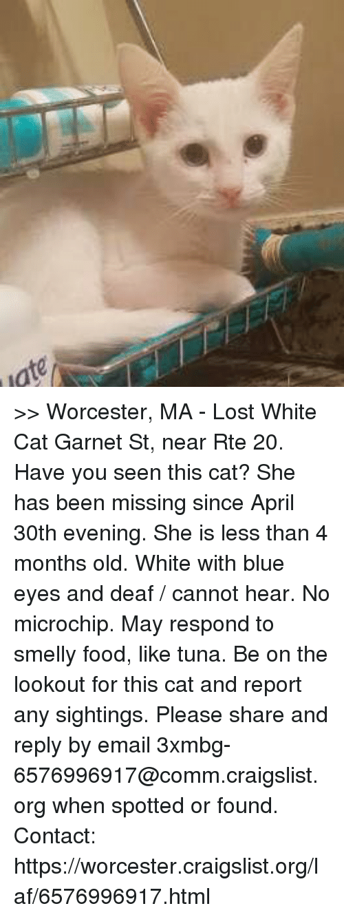 Have You Seen This Cat: ate >>   Worcester, MA - Lost White Cat   Garnet St,  near Rte 20.  Have you seen this cat?  She has been missing since April 30th evening. She is less than 4 months old.  White with blue eyes and deaf / cannot hear. No microchip. May respond to smelly food, like tuna.  Be on the lookout for this cat and report any sightings.  Please share and reply by email 3xmbg-6576996917@comm.craigslist.org when spotted or found.   Contact:  https://worcester.craigslist.org/laf/6576996917.html