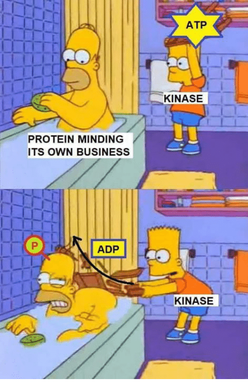 Memes, Protein, and Business: ATP  KINASE  PROTEIN MINDING  ITS OWN BUSINESS  ADP  KINASE