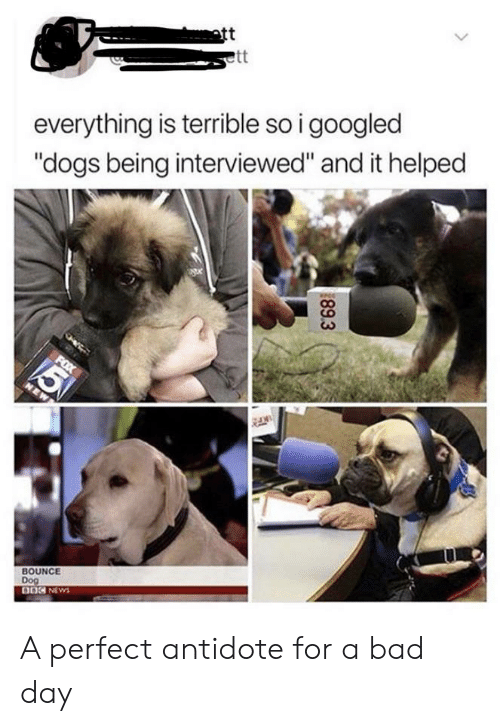"bounce: att  ett  everything is terrible so i googled  ""dogs being interviewed"" and it helped  5  FOX  NEW  BOUNCE  Dog  DOC NEWS  89.3 A perfect antidote for a bad day"