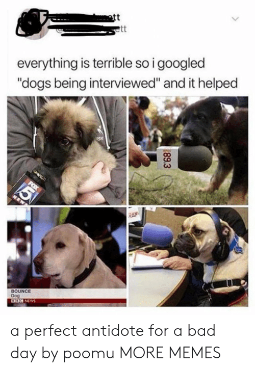 "Bad day: att  everything is terrible so i googled  ""dogs being interviewed"" and it helped  BOUNCE  Dog  89.3 a perfect antidote for a bad day by poomu MORE MEMES"