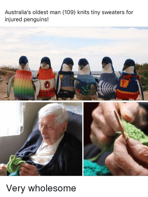 Penguins, Wholesome, and Tiny: Australia's oldest man (109) knits tiny sweaters for  injured penguins!  0 Very wholesome