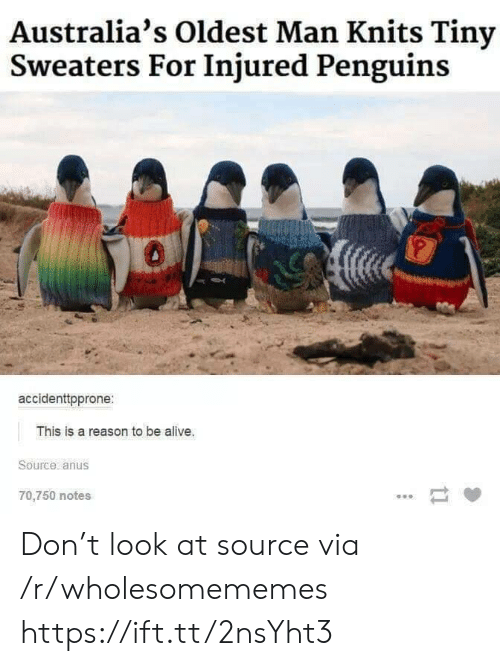 Alive, Penguins, and Reason: Australia's Oldest Man Knits Tiny  Sweaters For Injured Penguins  accidenttpprone:  This is a reason to be alive.  Source anus  70,750 notes  ti Don't look at source via /r/wholesomememes https://ift.tt/2nsYht3