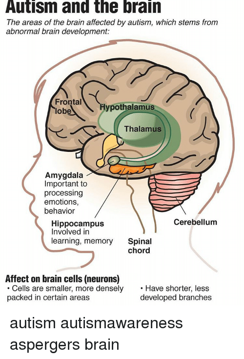 stress and its negative effects on the amygdala and hippocampus of the brain