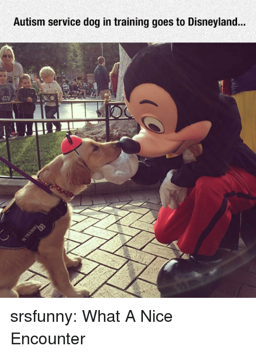 disneyland: Autism service dog in training goes to Disneyland... srsfunny:  What A Nice Encounter
