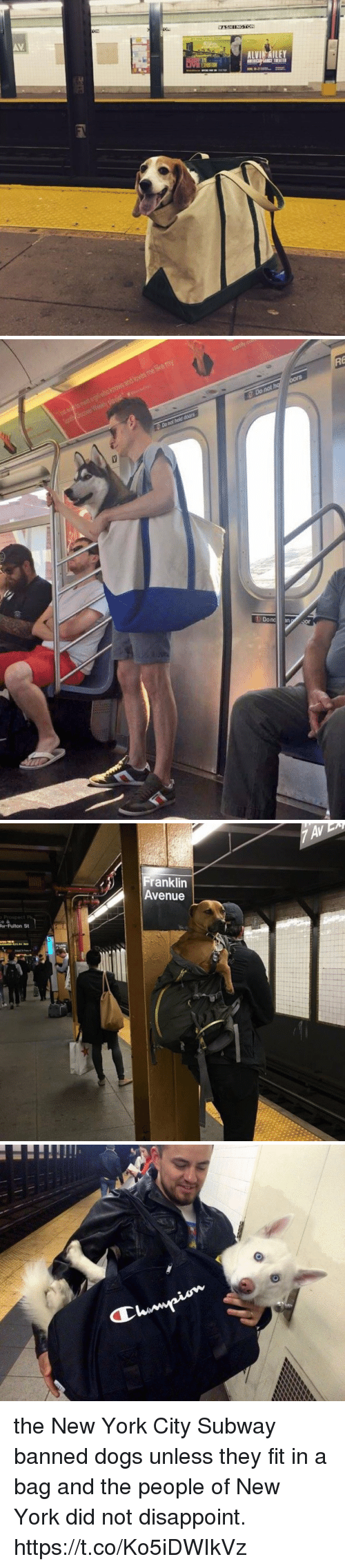 Franklinator: AV  ALVI AILEY   Franklin  Avenue  Av-Fulton St the New York City Subway banned dogs unless they fit in a bag and the people of New York did not disappoint. https://t.co/Ko5iDWIkVz