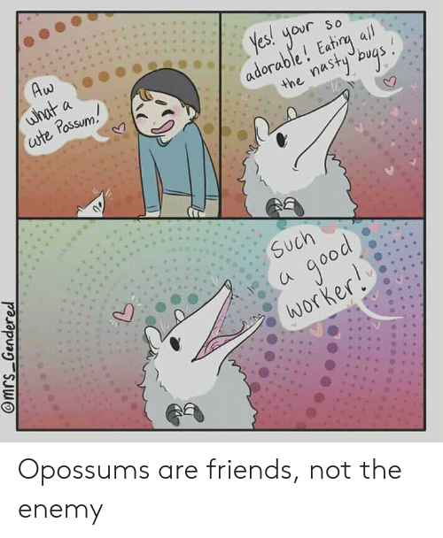 Friends, Good, and Possum: Aw  what  ute Possum  a  Yes!  your  adorable! Eatirg all  the nastybvas  So  Such  good  worker!  @mrs Gendered Opossums are friends, not the enemy