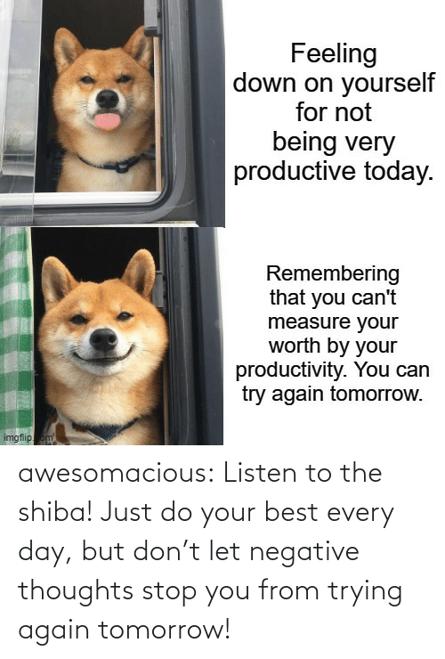 Listen To: awesomacious:  Listen to the shiba! Just do your best every day, but don't let negative thoughts stop you from trying again tomorrow!
