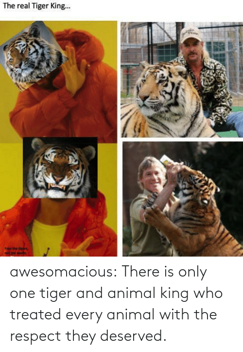Treated: awesomacious:  There is only one tiger and animal king who treated every animal with the respect they deserved.