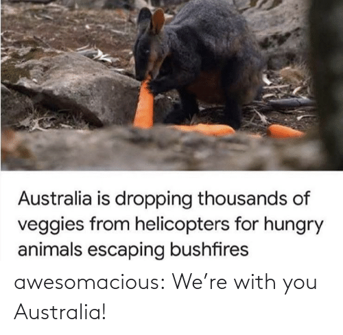 with you: awesomacious:  We're with you Australia!