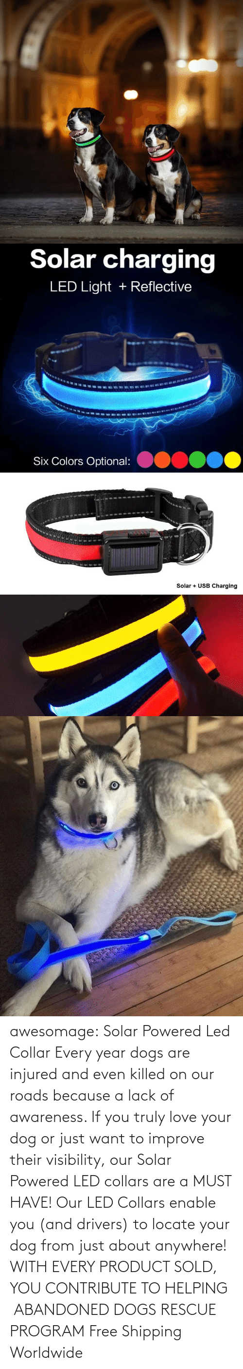 Sold: awesomage: Solar Powered Led Collar   Every year dogs are injured and even killed on our roads because a lack of awareness. If you truly love your dog or just want to improve their visibility, our Solar Powered LED collars are a MUST HAVE!   Our LED Collars enable you (and drivers) to locate your dog from just about anywhere!     WITH EVERY PRODUCT SOLD, YOU CONTRIBUTE TO HELPING  ABANDONED DOGS RESCUE PROGRAM     Free Shipping Worldwide