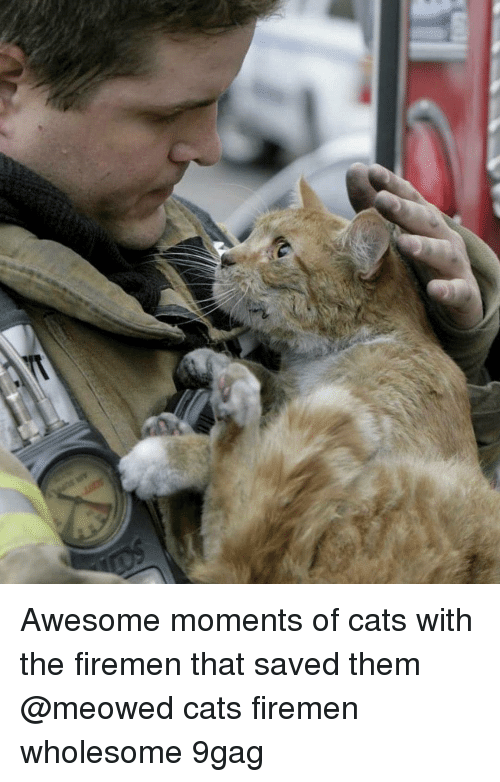 Firemen: Awesome moments of cats with the firemen that saved them @meowed cats firemen wholesome 9gag