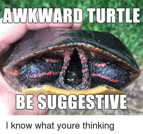 Awkward, Imgur, and Turtle: AWKWARD TURTLE  BE SUGGESTIVE  made on imgur I know what youre thinking