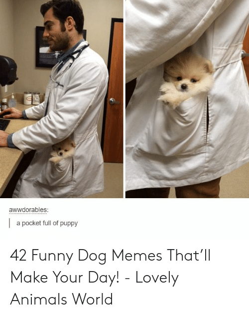 Animals, Funny, and Memes: awwdorables:  a pocket full of puppy 42 Funny Dog Memes That'll Make Your Day! - Lovely Animals World