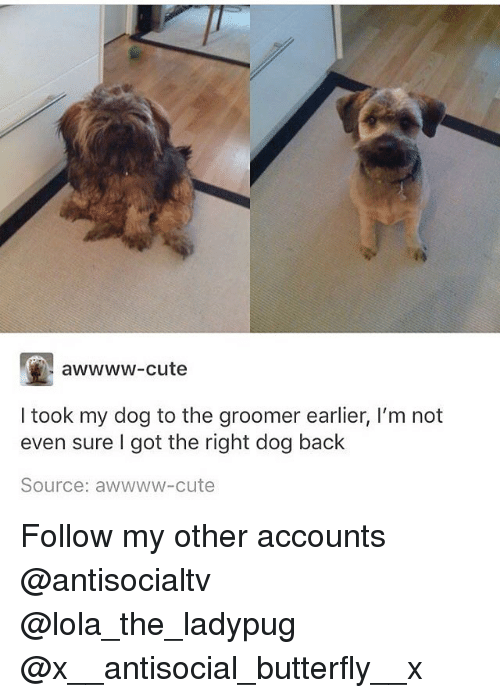 dogging: awwww-cute  I took my dog to the groomer earlier, I'm not  even sure I got the right dog back  Source: awwww-cute Follow my other accounts @antisocialtv @lola_the_ladypug @x__antisocial_butterfly__x