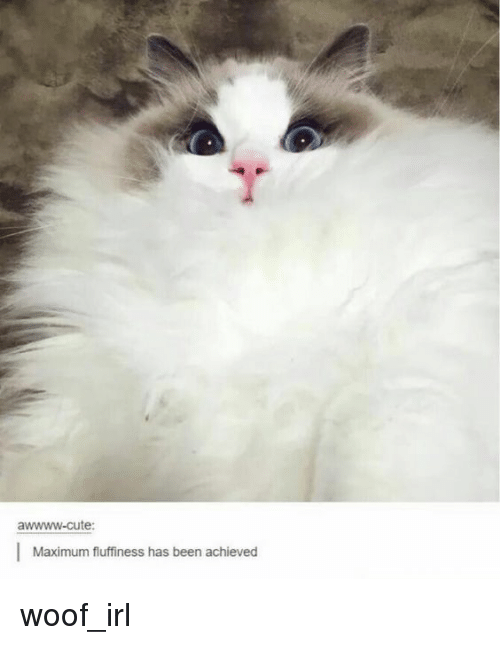 Fluffiness: awwww-cute:  Maximum fluffiness has been achieved
