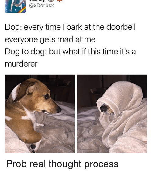 thought process: axDerbsx  Dog: every time l bark at the doorbell  everyone gets mad at me  Dog to dog: but what if this time it's a  murderer Prob real thought process