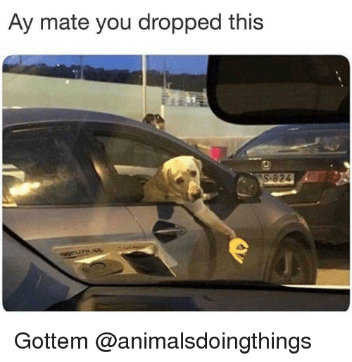 Dank Memes, You, and This: Ay mate you dropped this  9  82  UYW Gottem @animalsdoingthings