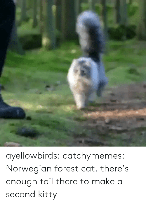 tail: ayellowbirds: catchymemes: Norwegian forest cat. there's enough tail there to make a second kitty