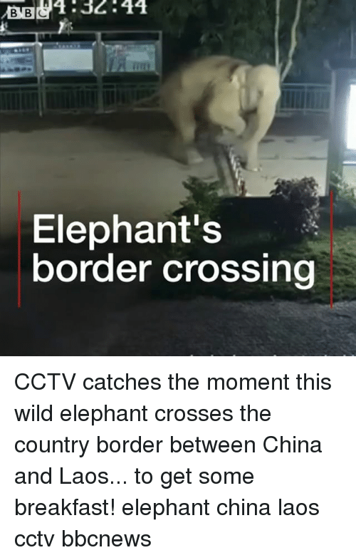 laos: B32:44  Elephant's  border crossing CCTV catches the moment this wild elephant crosses the country border between China and Laos... to get some breakfast! elephant china laos cctv bbcnews