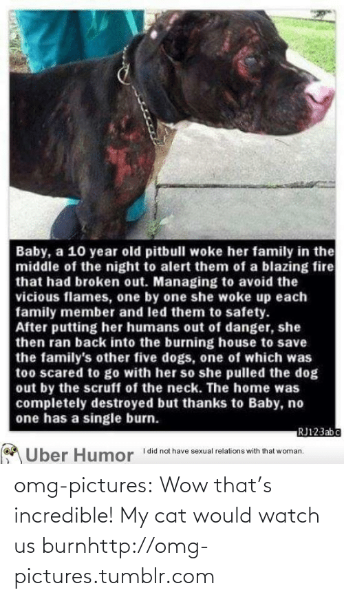 One By One: Baby, a 10 year old pitbull woke her family in the  middle of the night to alert them of a blazing fire  that had broken out. Managing to avoid the  vicious flames, one by one she woke up each  family member and led them to safety.  After putting her humans out of danger, she  then ran back into the burning house to save  the family's other five dogs, one of which was  too scared to go with her so she pulled the dog  out by the scruff of the neck. The home was  completely destroyed but thanks to Baby, no  one has a single burn.  RJ123abc  I did not have sexual relations with that woman.  Uber Humor omg-pictures:  Wow that's incredible! My cat would watch us burnhttp://omg-pictures.tumblr.com