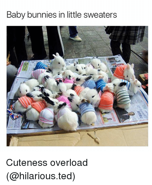 baby bunnies: Baby bunnies in little sweaters Cuteness overload (@hilarious.ted)