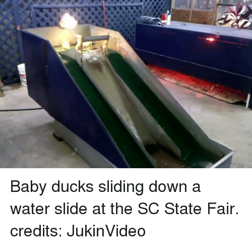 state fair: Baby ducks sliding down a water slide at the SC State Fair.  credits: JukinVideo