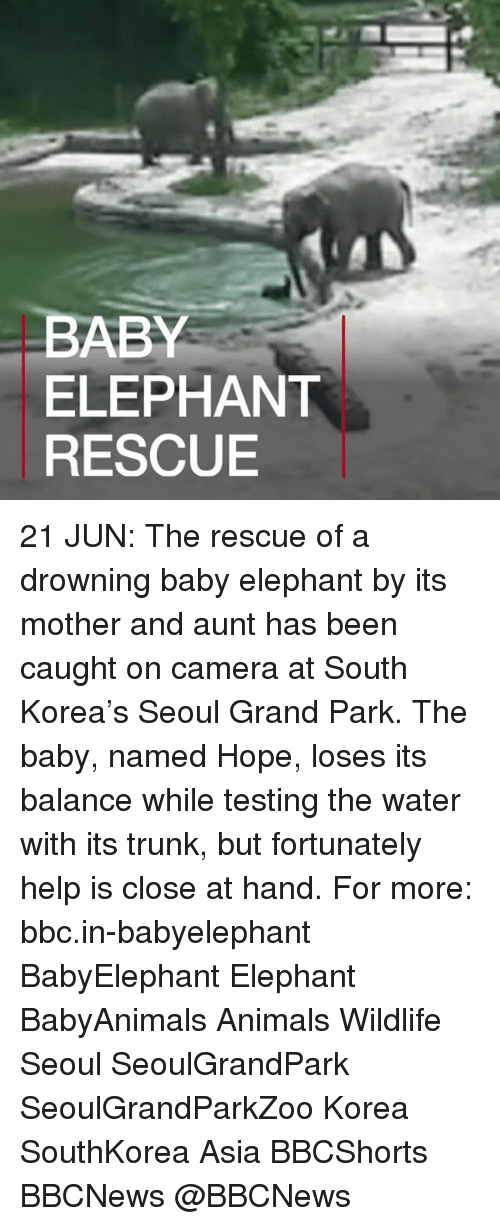 Trunking: BABY  ELEPHANT  RESCUE 21 JUN: The rescue of a drowning baby elephant by its mother and aunt has been caught on camera at South Korea's Seoul Grand Park. The baby, named Hope, loses its balance while testing the water with its trunk, but fortunately help is close at hand. For more: bbc.in-babyelephant BabyElephant Elephant BabyAnimals Animals Wildlife Seoul SeoulGrandPark SeoulGrandParkZoo Korea SouthKorea Asia BBCShorts BBCNews @BBCNews