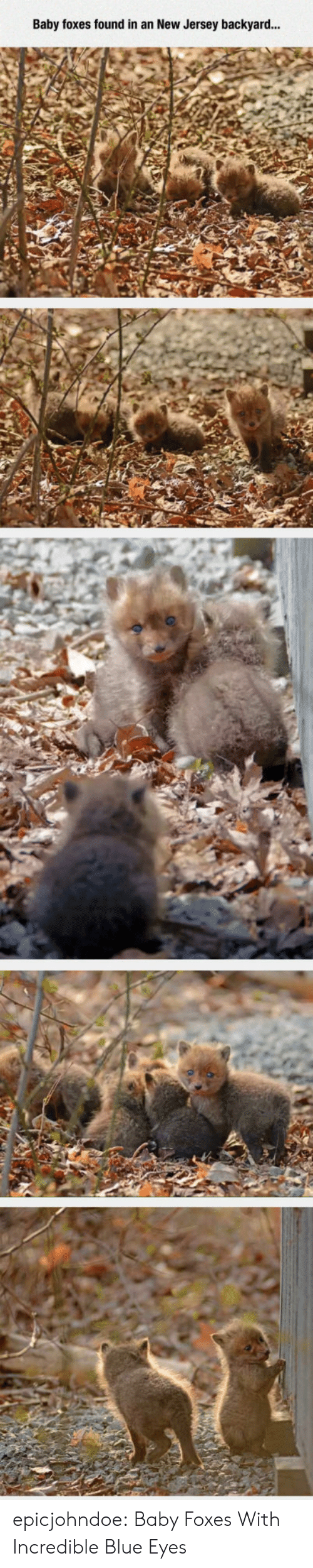 Tumblr, Blog, and Blue: Baby foxes found in an New Jersey backyard... epicjohndoe:  Baby Foxes With Incredible Blue Eyes