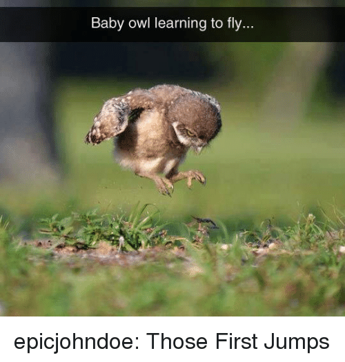 Tumblr, Blog, and Baby: Baby owl learning to fly. epicjohndoe:  Those First Jumps