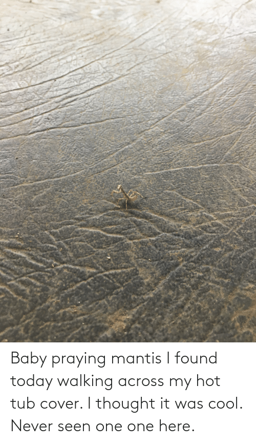 tub: Baby praying mantis I found today walking across my hot tub cover. I thought it was cool. Never seen one one here.