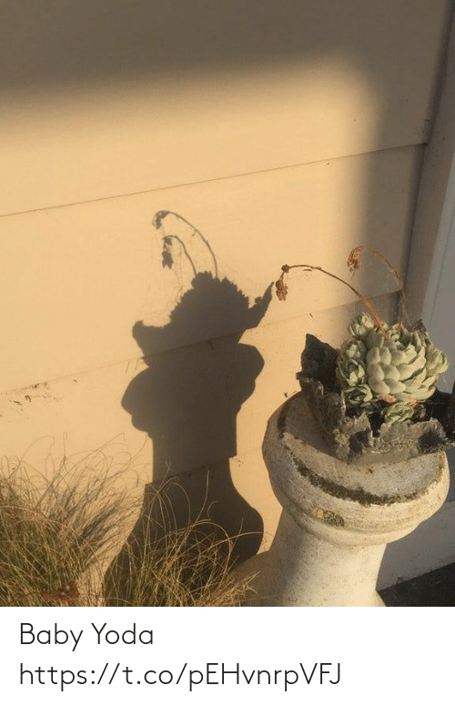 Yoda, Faces-In-Things, and Baby: Baby Yoda https://t.co/pEHvnrpVFJ