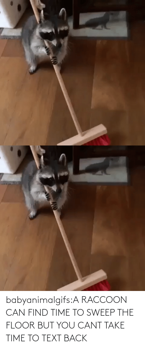 Sweep: babyanimalgifs:A RACCOON CAN FIND TIME TO SWEEP THE FLOOR BUT YOU CANT TAKE TIME TO TEXT BACK