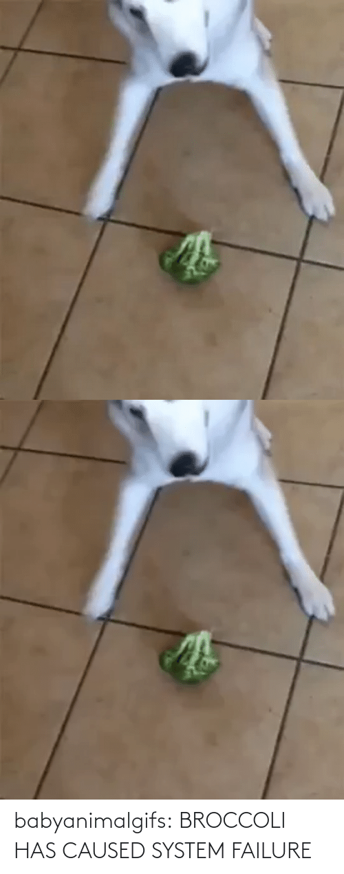 system: babyanimalgifs:  BROCCOLI HAS CAUSED SYSTEM FAILURE