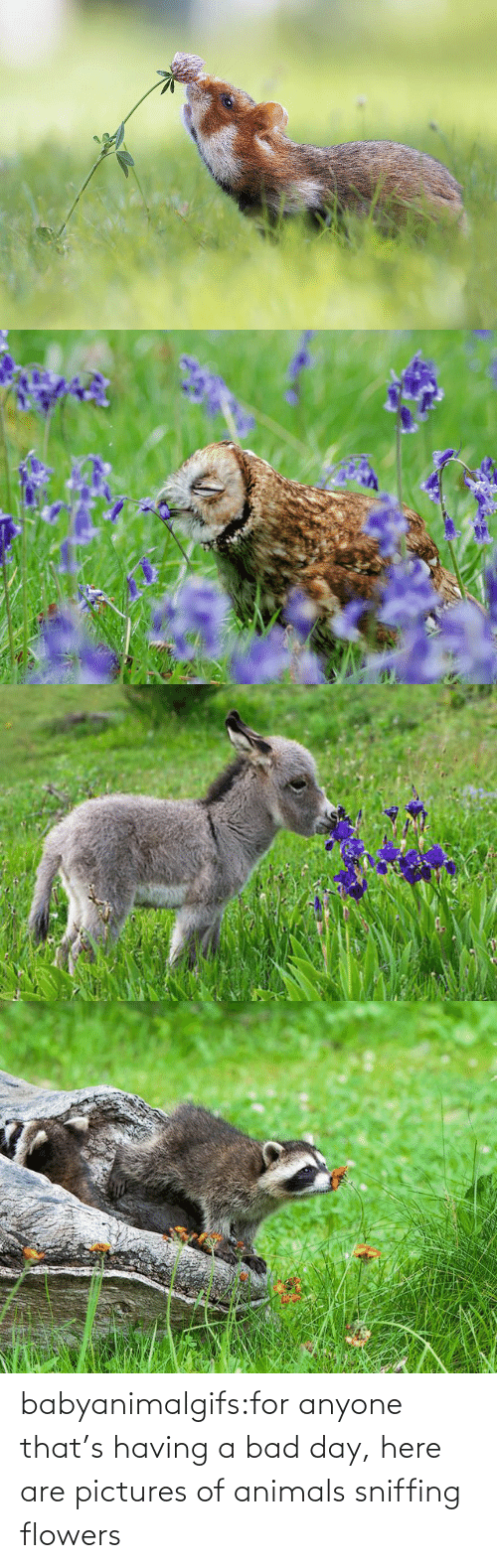pictures of: babyanimalgifs:for anyone that's having a bad day, here are pictures of animals sniffing flowers