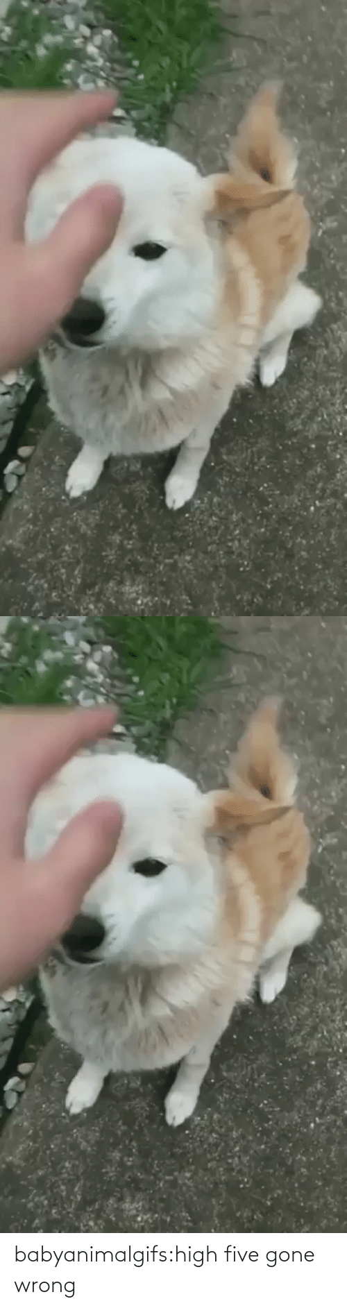gone: babyanimalgifs:high five gone wrong