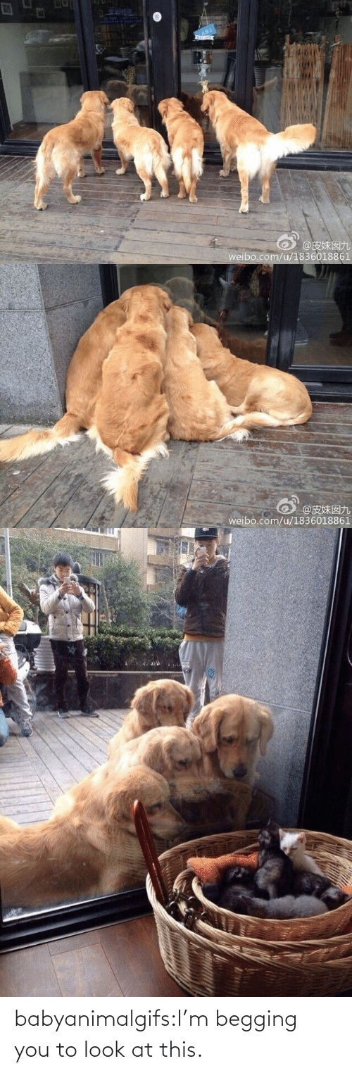 Im: babyanimalgifs:I'm begging you to look at this.