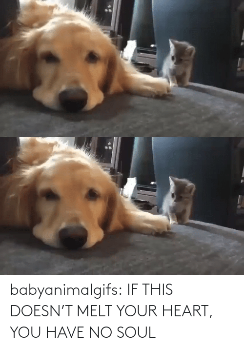 You Have No: babyanimalgifs:  IF THIS DOESN'T MELT YOUR HEART, YOU HAVE NO SOUL