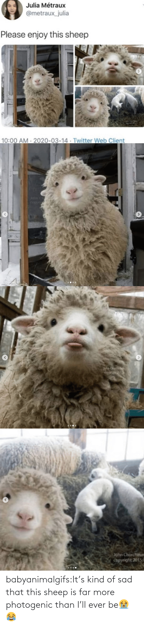 Far: babyanimalgifs:It's kind of sad that this sheep is far more photogenic than I'll ever be😭😂