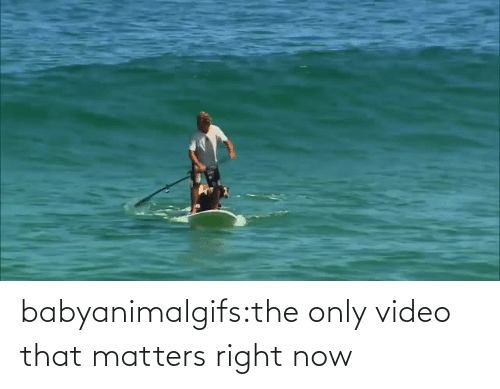Matters: babyanimalgifs:the only video that matters right now