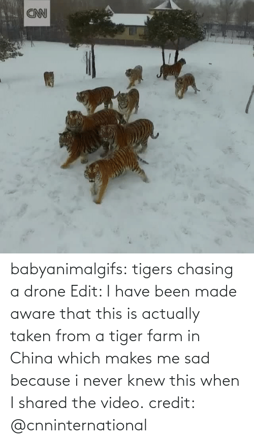 Taken: babyanimalgifs: tigers chasing a drone Edit: I have been made aware that this is actually taken from a tiger farm in China which makes me sad because i never knew this when I shared the video. credit: @cnninternational