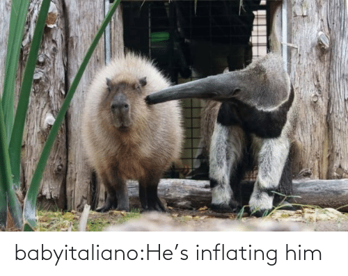 hes: babyitaliano:He's inflating him