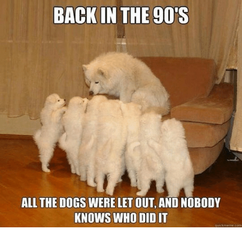 Dogs, 90's, and All The: BACK IN THE 90'S  ALL THE DOGS WERE LET OUT, AND NOBODY  KNOWS WHO DID IT  quickmee.com