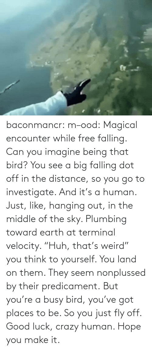 "magical: baconmancr:  m–ood: Magical encounter while free falling.  Can you imagine being that bird? You see a big falling dot off in the distance, so you go to investigate. And it's a human. Just, like, hanging out, in the middle of the sky. Plumbing toward earth at terminal velocity.  ""Huh, that's weird"" you think to yourself.  You land on them. They seem nonplussed by their predicament. But you're a busy bird, you've got places to be. So you just fly off. Good luck, crazy human. Hope you make it."