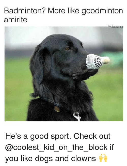 Dogs, Memes, and Clowns: Badminton? More like goodminton  amirite  BadtasteBB He's a good sport. Check out @coolest_kid_on_the_block if you like dogs and clowns 🙌